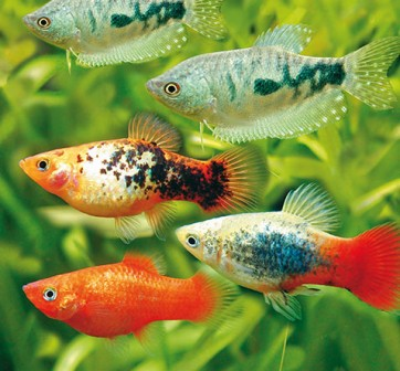 Aquarium fische co bei hornbach kaufen for Aquarium fische arten