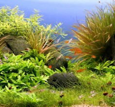 Aquascaping-Landschaft