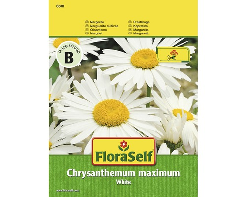 Margerite 'White' FloraSelf Blumensamen