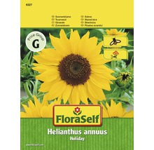 Sonnenblume 'Holiday' FloraSelf Blumensamen
