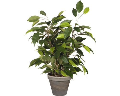 kunstpflanze birkenfeige ficus natasja 30 h 40 cm gr n bei hornbach kaufen. Black Bedroom Furniture Sets. Home Design Ideas