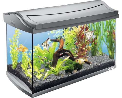 aquarium tetra aquaart 60 mit beleuchtung filter heizer futter wasseraufbereiter ohne. Black Bedroom Furniture Sets. Home Design Ideas